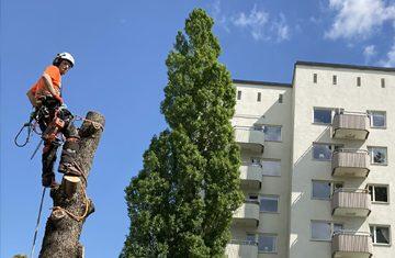 Vi är specialister på att fälla träd. Vi utför alla sorters fällningar. Träd som står trångt klättrar vi i och fäller bit för bit.